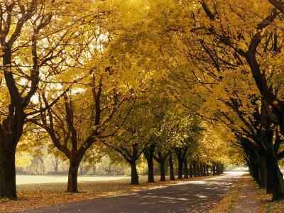 Maple Tree Grove in Park, WI-Ken Wardius-Photographic Print