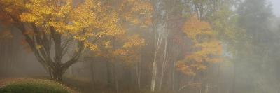 Maple Tree in Full Fall Colors Stands in the Morning Fog-Greg Dale-Photographic Print
