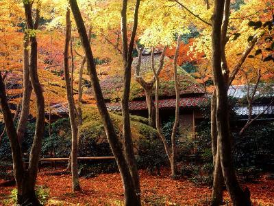 Maple Trees at Giou-Ji Temple in Autumn, Kyoto, Japan--Photographic Print