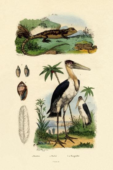 Marabou Stork, 1833-39--Giclee Print
