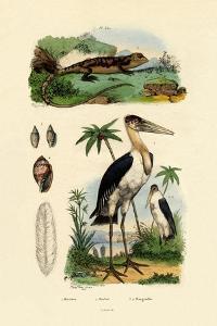 Marabou Stork, 1833-39