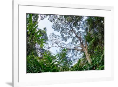 Marantaceae forest. Odzala-Kokoua National Park. Congo-Roger De La Harpe-Framed Premium Photographic Print