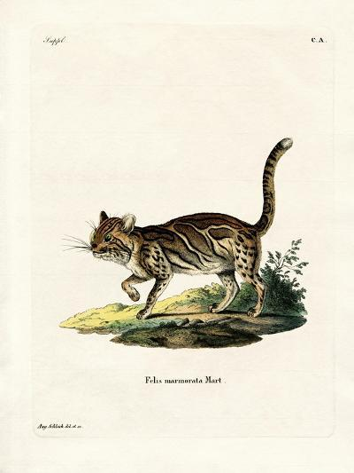Marbled Cat--Giclee Print