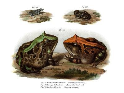 Marbled Four-Eyed Frog--Giclee Print