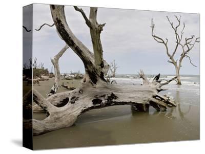 Drift Wood Along the Eroding Shoreline and Beaches, Cape Romain National Wildlife Refuge