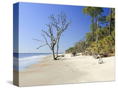 Sandy Shore of Otter Island with Driftwood and Dead Vegetation, a Barrier Island