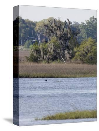 Smooth Cordgrass (Spartina Alterniflora) Tidal Salt Marshes, Stono River, Charleston