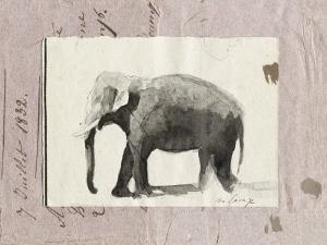 The Elephant by Marc Lacaze