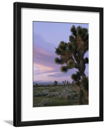 A Joshua Tree against the Twilight Sky