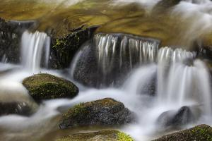 A Scenic Close Up of Fern Spring Cascading over a Small Fall by Marc Moritsch