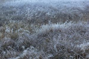 A Scenic Landscape of Frost-Covered Grass by Marc Moritsch