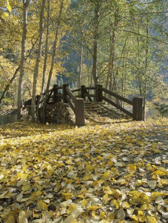 A Sentinel Meadow Footbridge Blanketed in Autumn Foliage