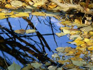 Autumn Leaves Float in a Pool of Water by Marc Moritsch