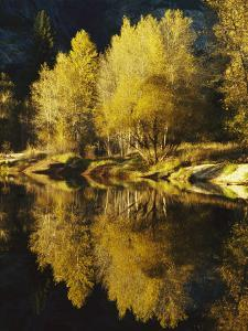 Autumn Trees Reflected in the Merced River by Marc Moritsch