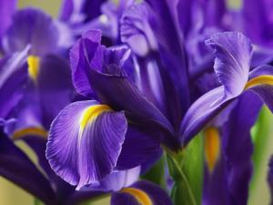 Close View of Irises by Marc Moritsch