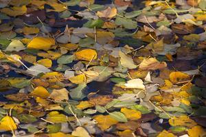 Fallen Leaves in Autumn Hues a Pool of Water in Yosemite National Park by Marc Moritsch