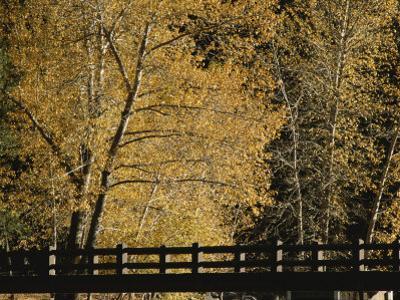 Golden Trees Surround a Footbridge