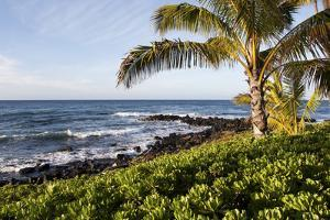 Palm Trees, Volcanic Rock, and Surf on the Beaches at Poipu by Marc Moritsch