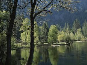 Scenic View of the Merced River in Spring by Marc Moritsch