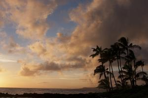 Silhouetted Palm Trees and Pinkish Clouds at Sunset on Poipu Beach by Marc Moritsch