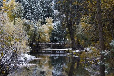 Snow-Covered Trees and Bridge on the Merced River in Yosemite Valley