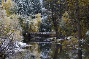 Snow-Covered Trees and Bridge on the Merced River in Yosemite Valley by Marc Moritsch
