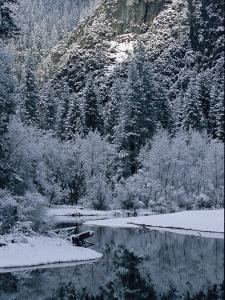 Snow-Covered Trees Reflected on the Surface of the Merced River by Marc Moritsch