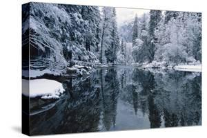 Snow-covered trees reflected on the surface of the Merced River. by Marc Moritsch