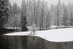 Snow Falling in a Forested Landscape Along the Merced River by Marc Moritsch