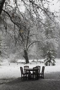 Snow Falling on a Table and Chairs Set in a Clearing at the Edge of a Forest by Marc Moritsch