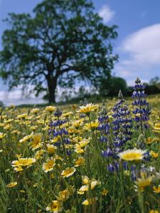Spring Wildflowers in a Field by Marc Moritsch