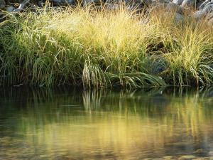 Sunbeams Light a Clump of Wild Grass Along the Water's Edge by Marc Moritsch