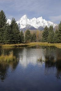 The Teton Range and the Snake River with a Forest of Evergreen Trees Between Them by Marc Moritsch