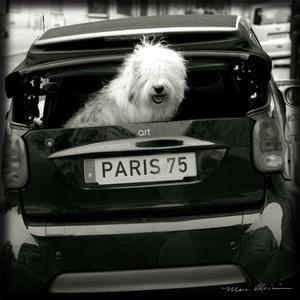 Paris Dog I by Marc Olivier