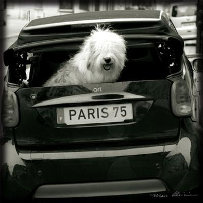 Paris Dog I by Marc Olivier