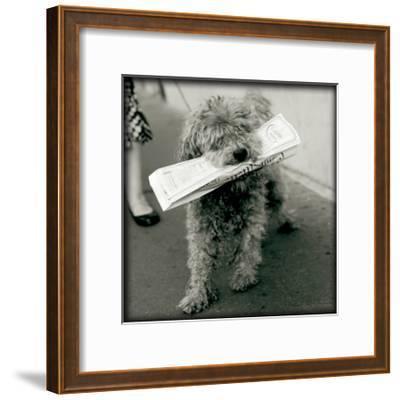 Paris Dog II