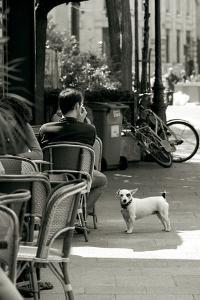 Paris Dog III BW Crop by Marc Olivier