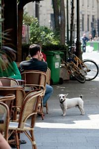 Paris Dog III by Marc Olivier