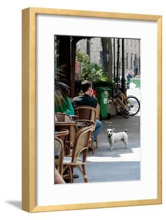 Paris Dog III
