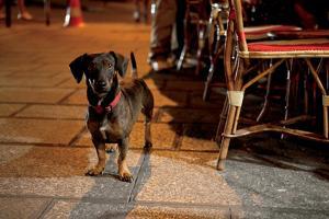 Paris Dog IV by Marc Olivier