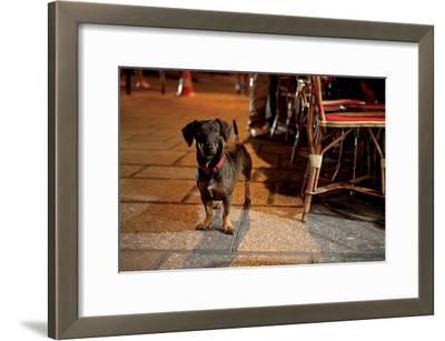 Paris Dog IV