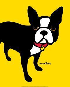 Boston Terrier by Marc Tetro