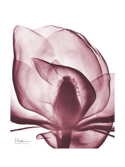 Marcela Magnolia-Albert Koetsier-Art Print