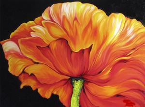 A Single Poppy by Marcia Baldwin