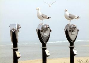 The Onlookers by Marcia Joy Duggan