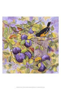 Oriole & Plums by Marcia Matcham