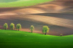 Cheestnut Family by Marcin Sobas