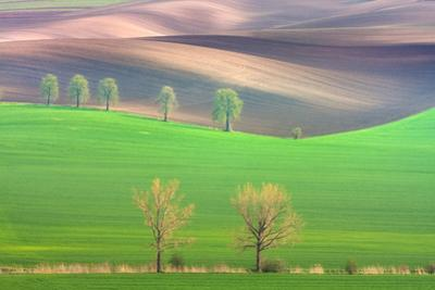 Cheestnut's and Willow'S by Marcin Sobas