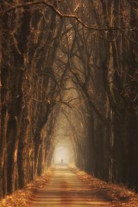 Cheestnut's Avenue by Marcin Sobas