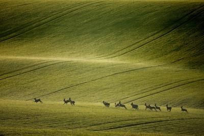 Escape by Marcin Sobas